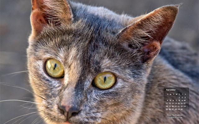 September desktop wallpaper calendar cat - free - Dora. Click for full size, right-click and select save as desktop background
