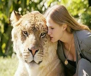 Harimau terbesar didunia