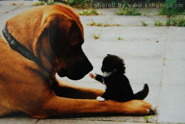 http://2.bp.blogspot.com/-OcdCffFEcIY/TXlnHqfAWII/AAAAAAAAQyY/mHNG2UEOarM/s1600/these_funny_animals_635_640_01.jpg