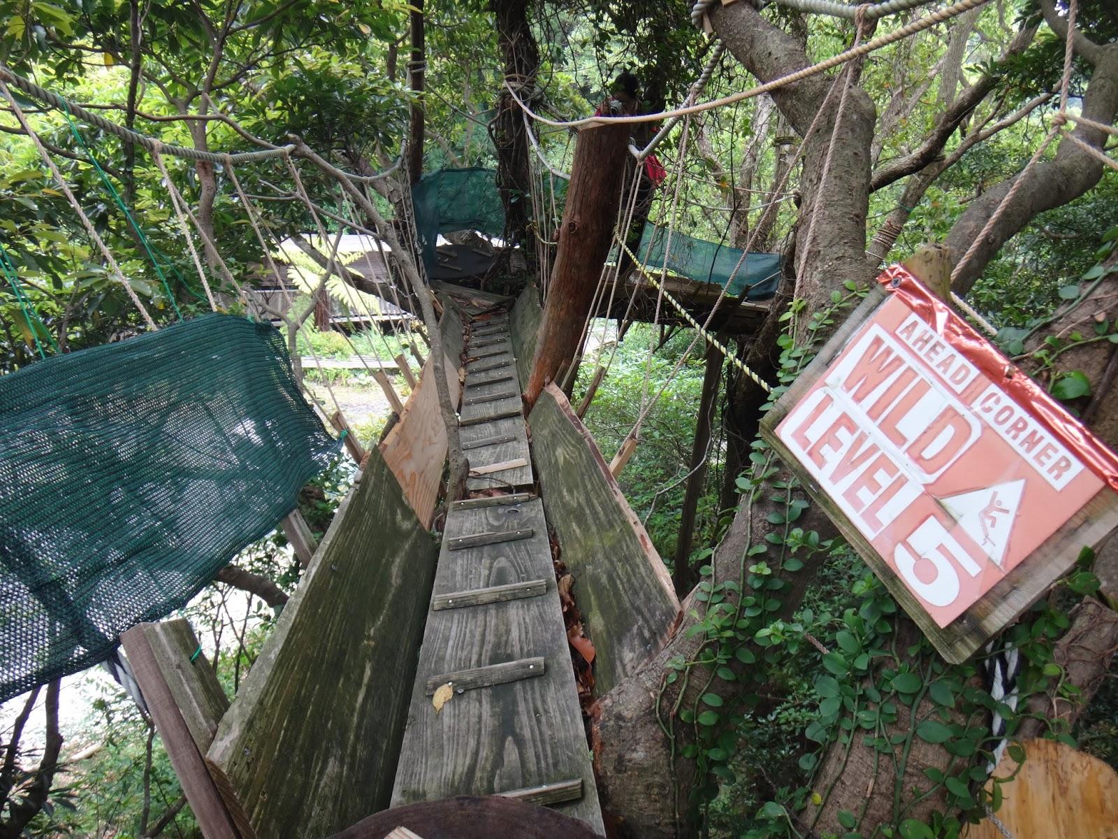 & Yakushima Life: Canopy Walk and Tree-House Cafe
