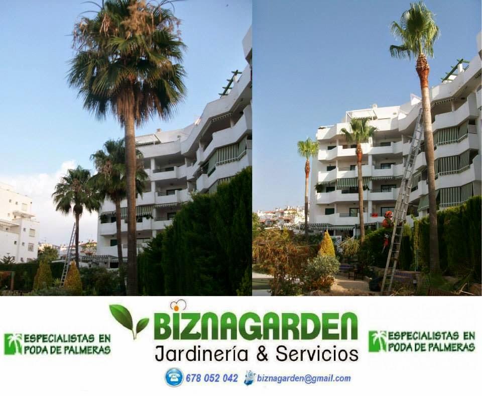 Poda de palmeras en torremolinos biznagarden empresa de for Empresas de jardineria en girona