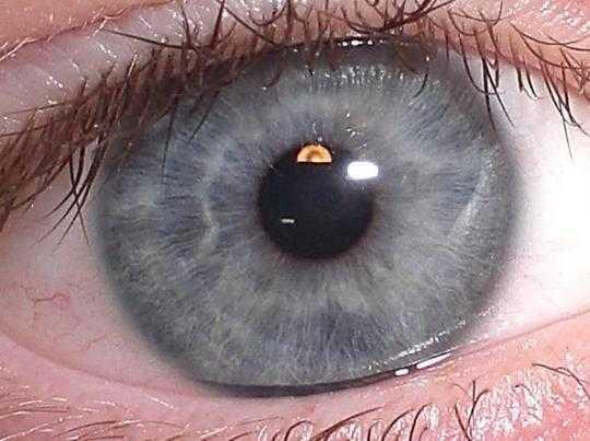Warna mata Abu - abu