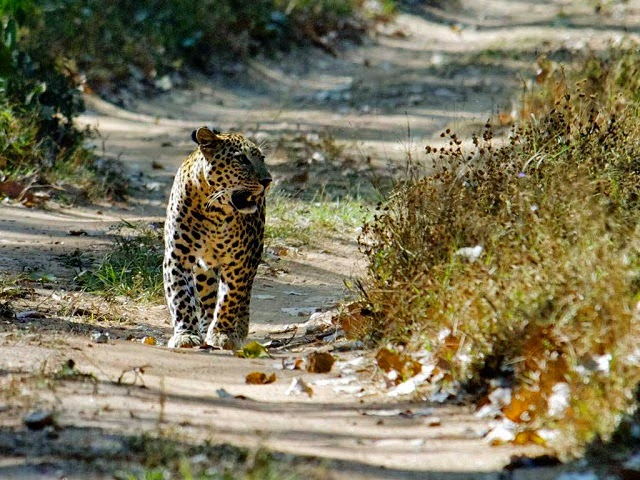 Pench National Park,Madhya Pradesh