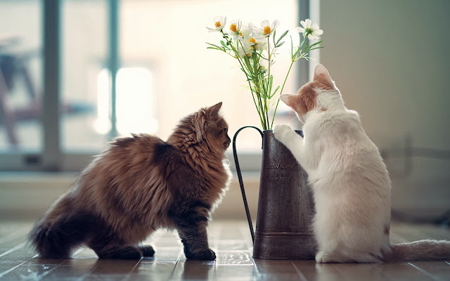 Two Kittens And Daisies