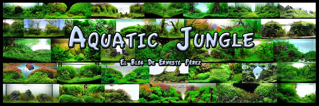 Aquatic Jungle