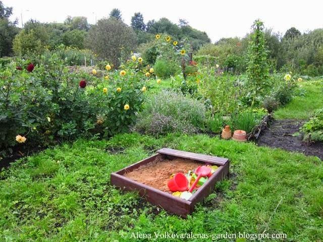 аленин сад, часть3, до, после, участок, дача, освоение участка, целина, сад, огород, песочница, на даче, георгины