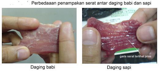 Perbadingan Daging Sapi Dan Daging Babi