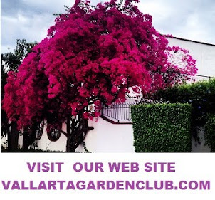Vallarta Garden Club Web Page