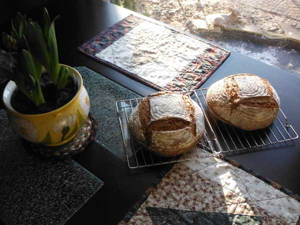 Whole wheat sourdough bread with 17 percent rye flour and wheat germ