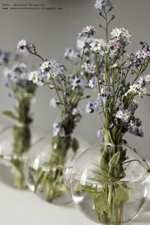 vas, glas, blå blommor, vårblomma, vårblommor, loppisfynd, loppis,