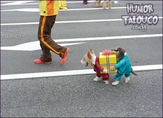 melhor-fantasia-cachorro-carregando-caixa