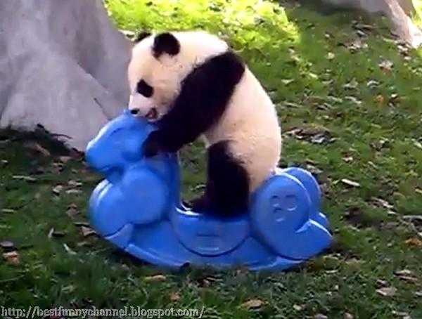 Panda play.