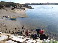 op zoek naar oesters