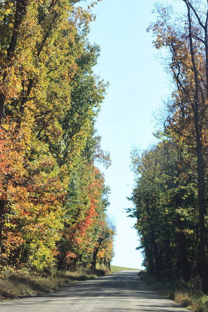 towering Autumn trees create a tunnel above the road.