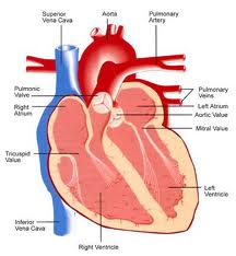 causes related cardiomyopathy syndromes