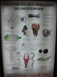 Τα πιο επικίνδυνα είδη της Μεσογείου!