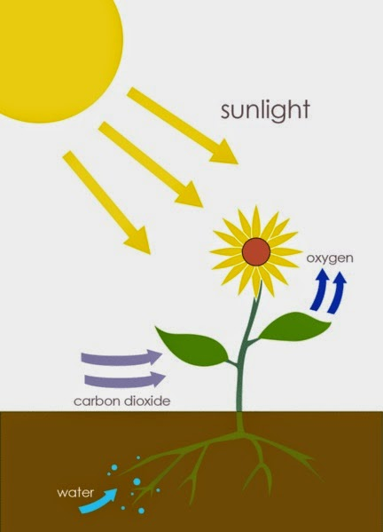 Photosynthesis: incomplete Wikipedia diagram.