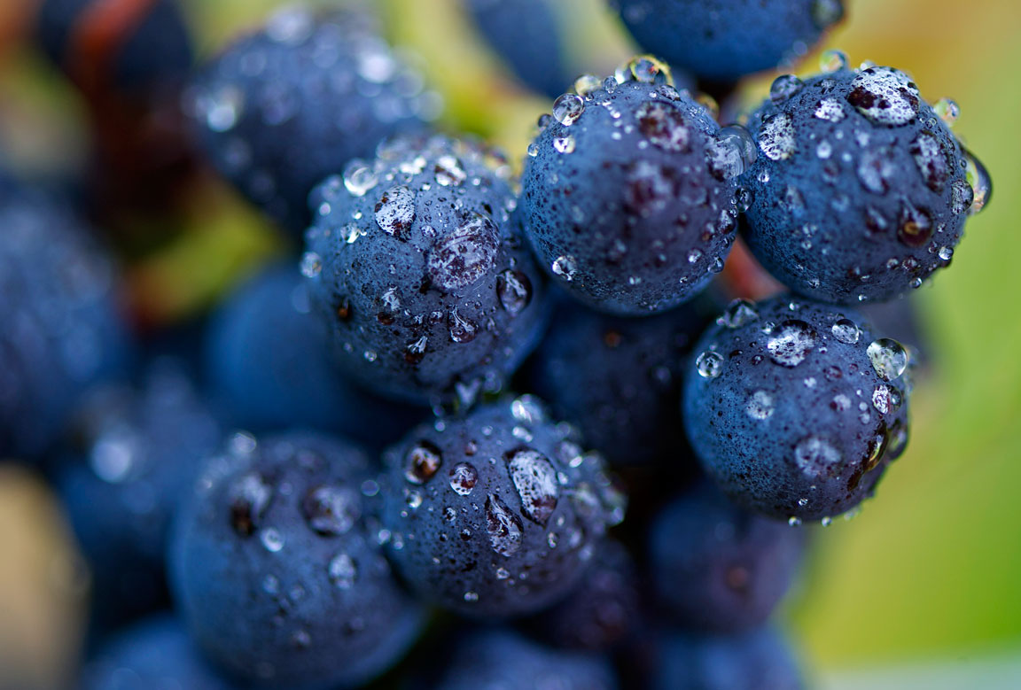 Displaying 17> Images For - Wine Grapes...