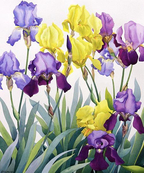 Lirios y arte taringa for Jardin 7 colores bernal