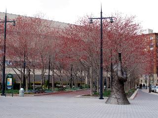 New York _Battery Park 1