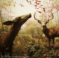 Autumn Animal Art Images2
