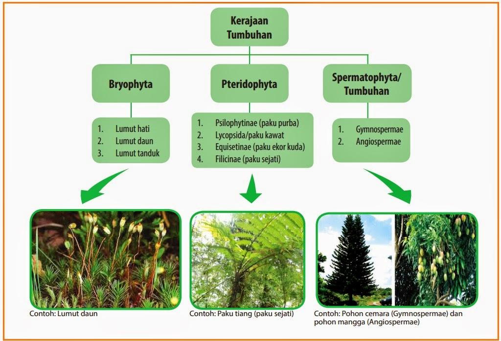 Biologi Gonzaga Tumbuhan Plantae Smp