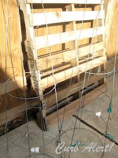 DIY Tomato Cage Topiaries via Curb Alert! blog http://tamicurbalert.blogspot.com