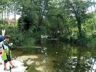 El Fornés a l'aiguabarreig amb el riu Ges