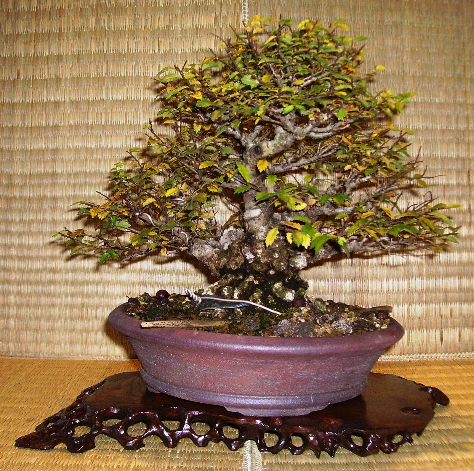 Bespoke Bonsai Stands November 2011