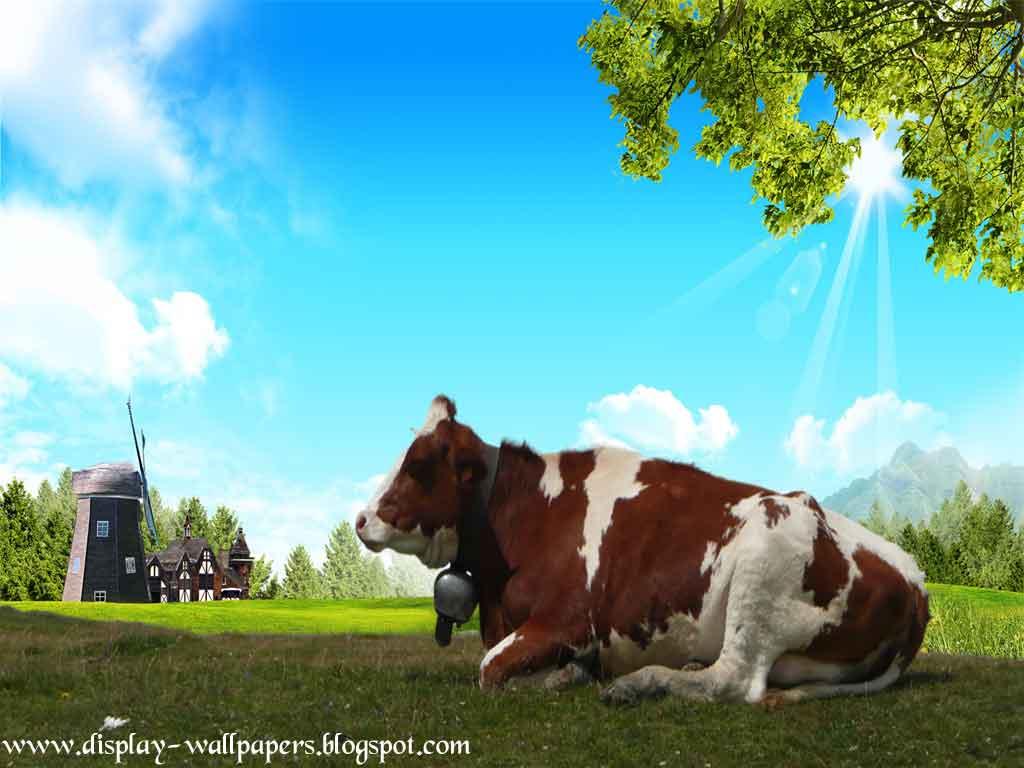 http://2.bp.blogspot.com/-OhMXveIJ7iI/UOgBWw3bqBI/AAAAAAAAE_Q/Ws9aJdXNEwI/s1600/Cow-Latest-Wallpapers-2013-1.jpg