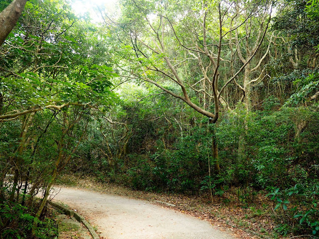 Forest path through trees on Dragon's Back trail, Hong Kong Island