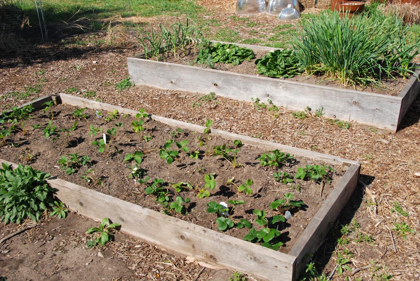 Gaia Garden: April 2014