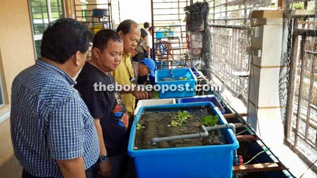 Hasil lawatan wakil dari Sibu, Sarawak:  http://www.theborneopost.com/2014/10/31/accountant-turned-lobster-farmer-reaps-reward/