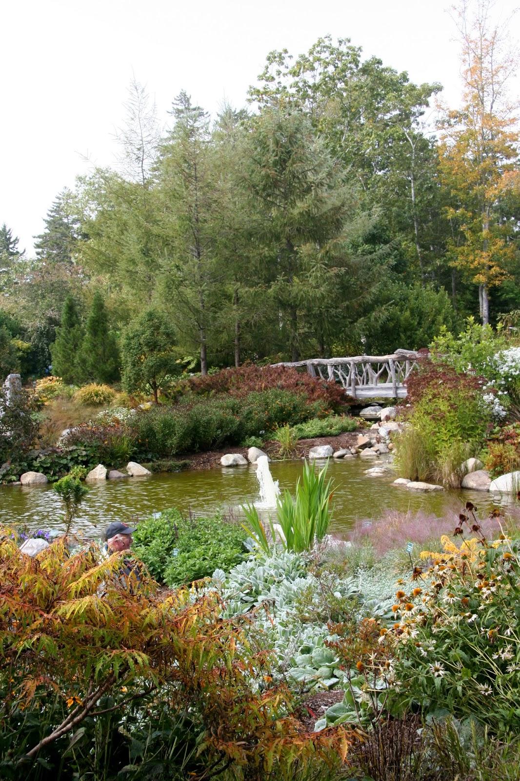 Daffodils Daydreams Garden Visit Maine Coastal Botanical Gardens