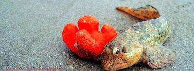 Facebook couverture vivante poisson