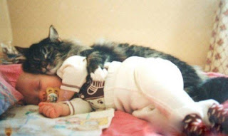 funny picture: baby sleeps with a cat