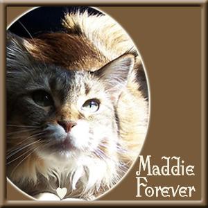 Maddie  RIP
