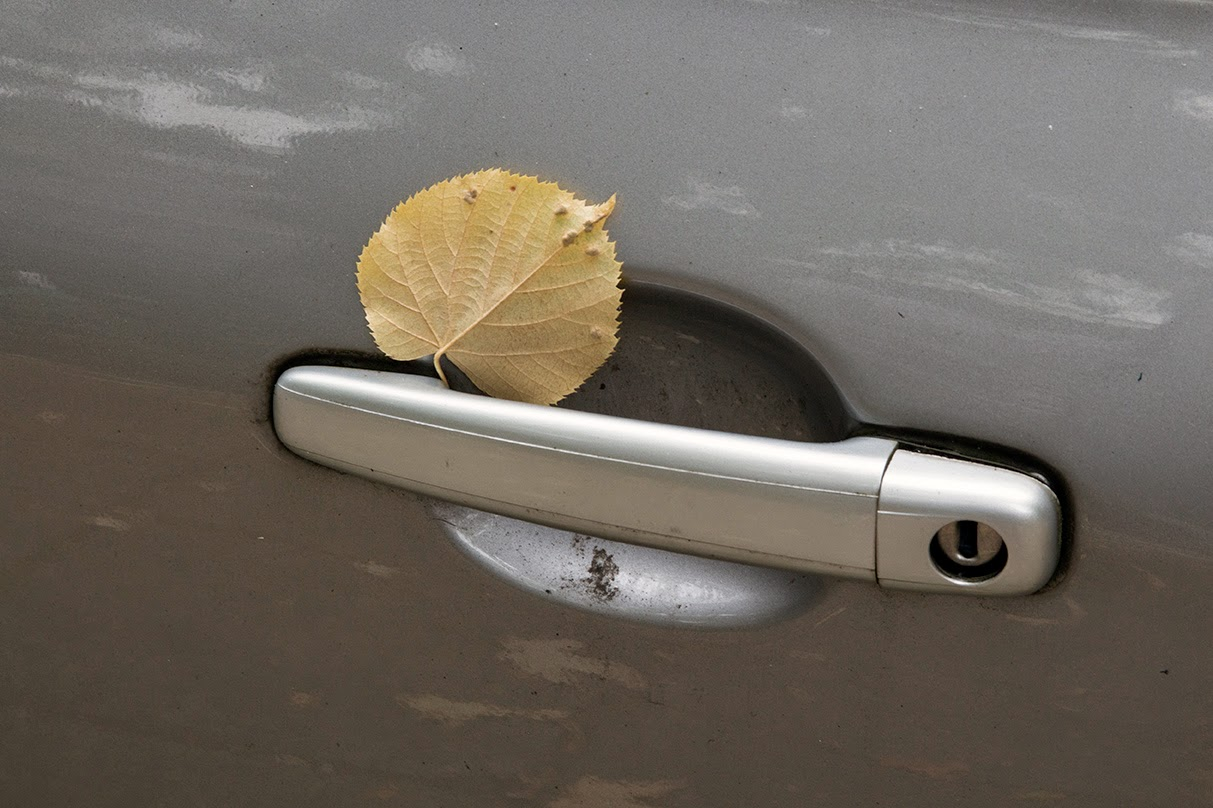 yellow leaf on silver car