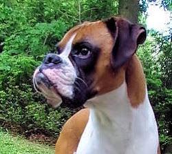 PAWELCOME TO DOGGIE DOG MADNESS