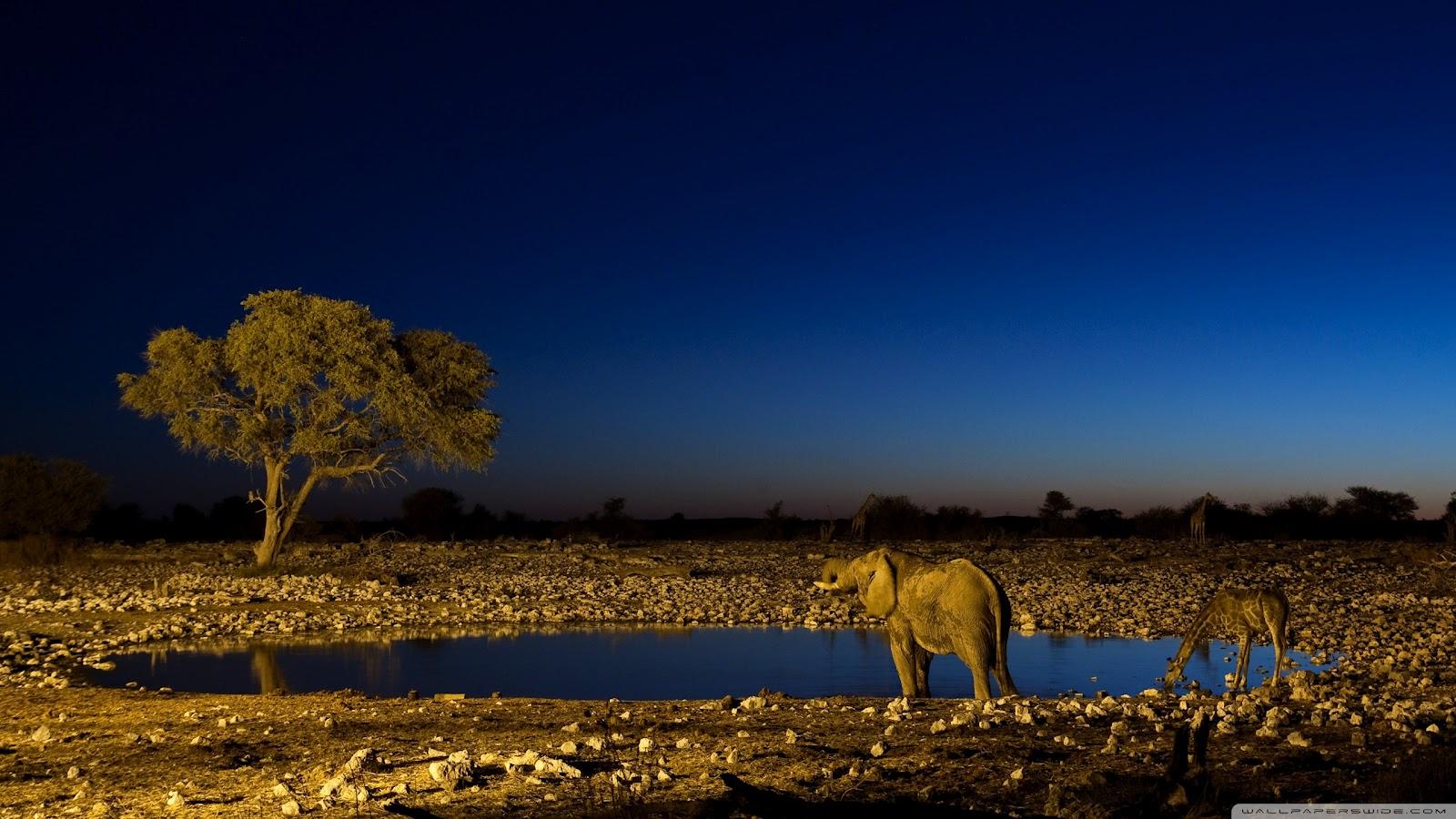 http://2.bp.blogspot.com/-OitU_SNathg/UDVyla-TfTI/AAAAAAAAEK0/uTcI6rSDmRQ/s1600/African+Elephants+wallpaper.jpg