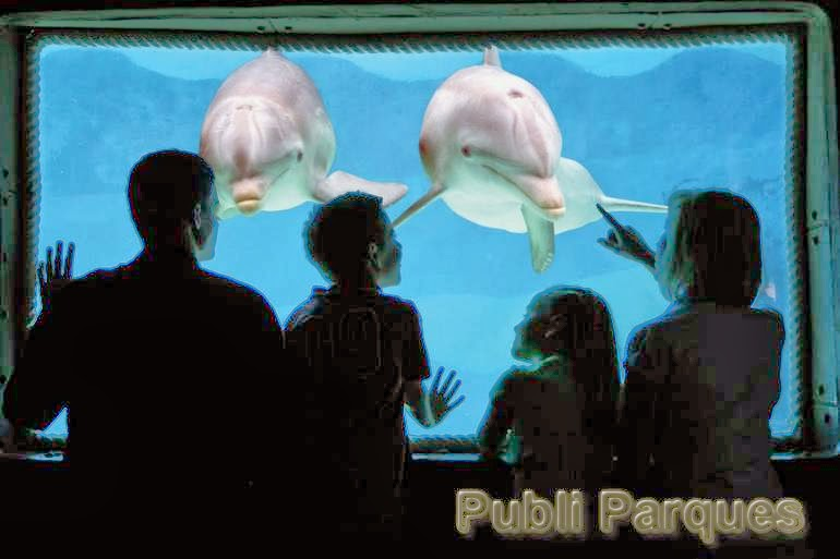 Delfines Mundomar