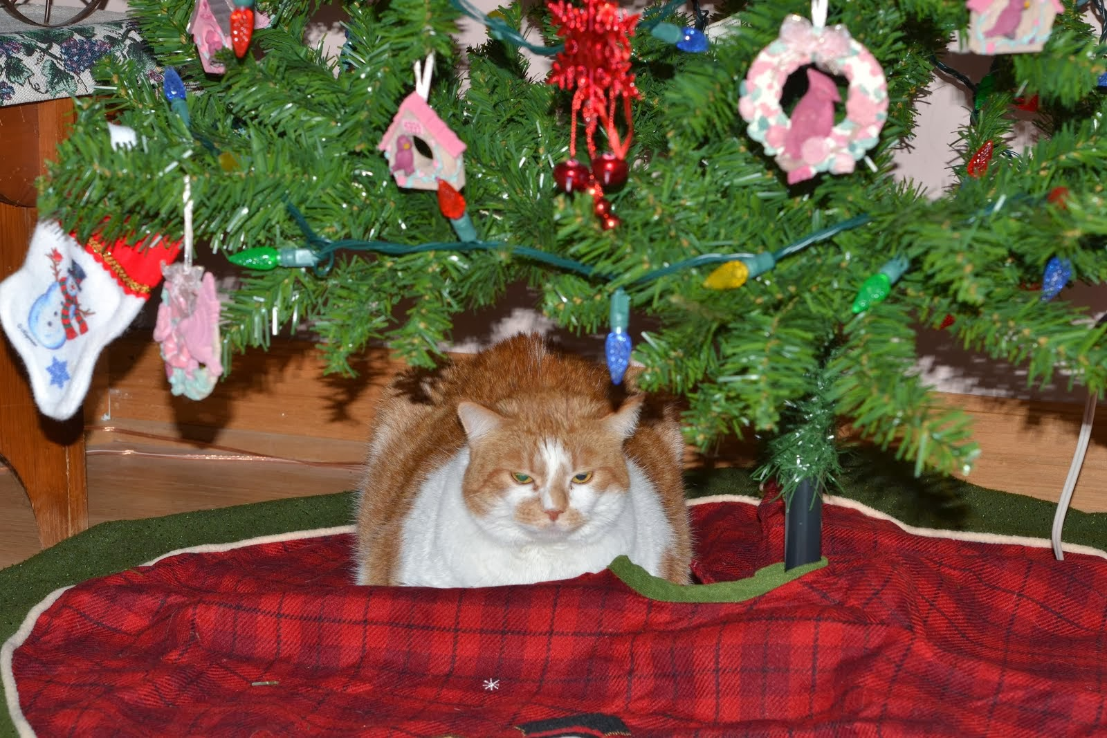 HARLEY UNDER THE TREE