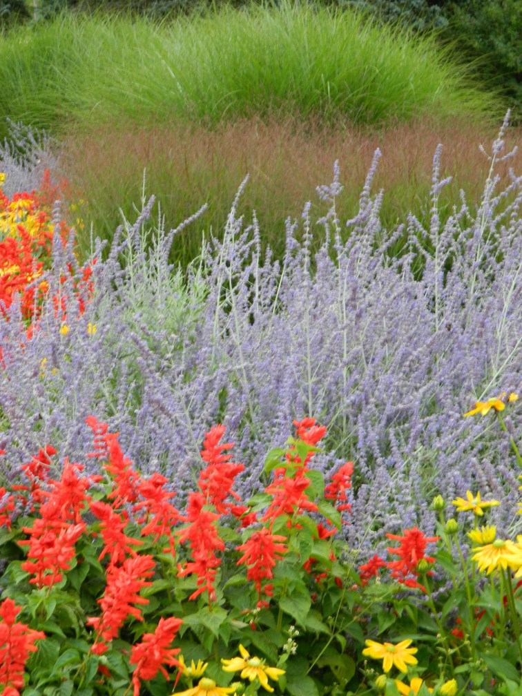 James Gardens late summer primary colour annuals by garden muses- a Toronto gardening blog