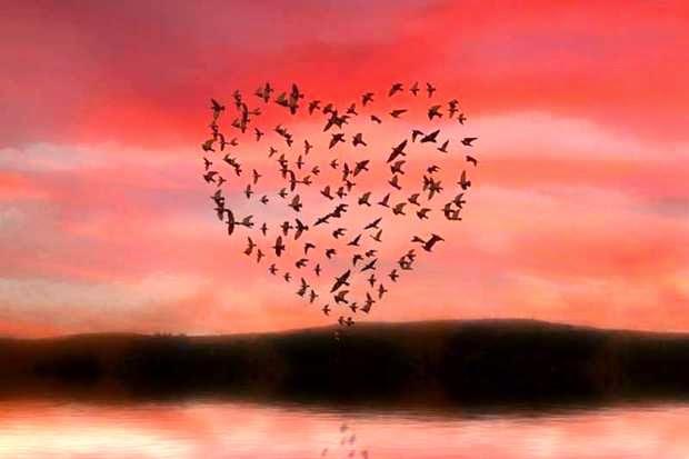 L'amore è uno solo.