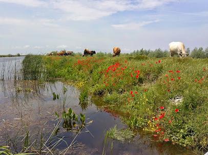 Delta Dunării - canalul de centură - Sulina
