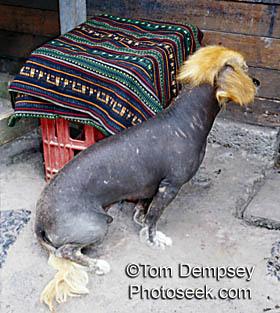 kaskus-forum.blogspot.com - 13 Makhluk aneh yang sampai sekarang masih menjadi misteri