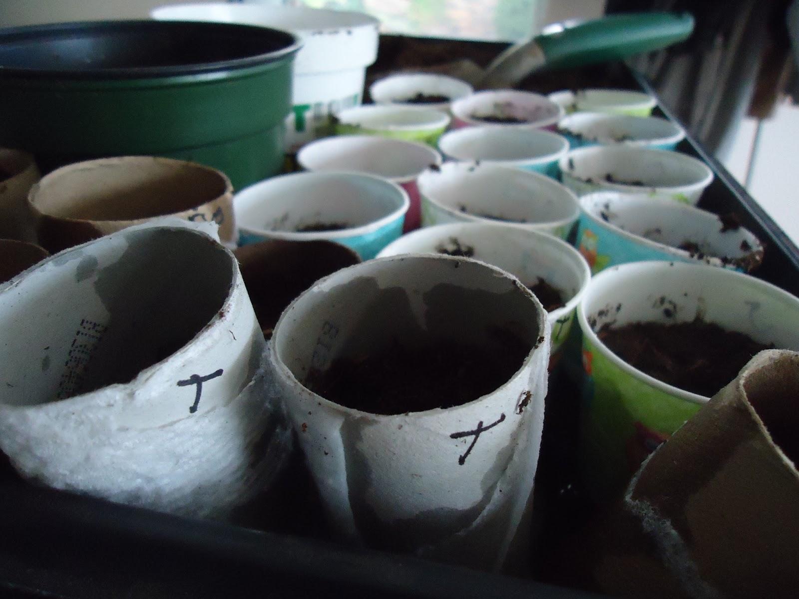 organic tomato starter seeds