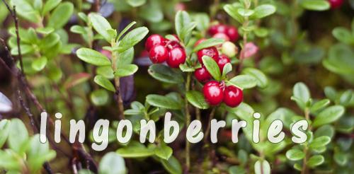 cooking vegan food up north lingonberry jam. Black Bedroom Furniture Sets. Home Design Ideas
