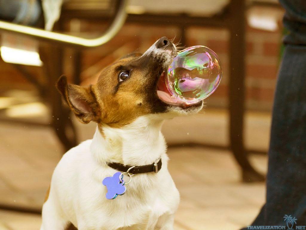 perro jugando con burbujas