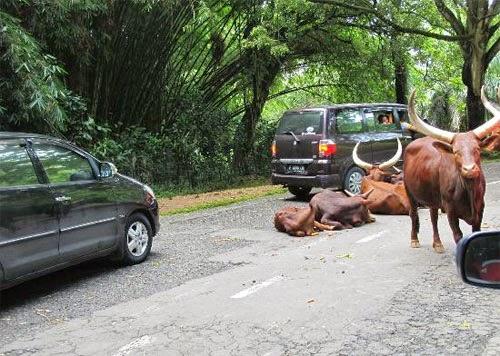 Jelajah Tempat Wisata Di Bogor